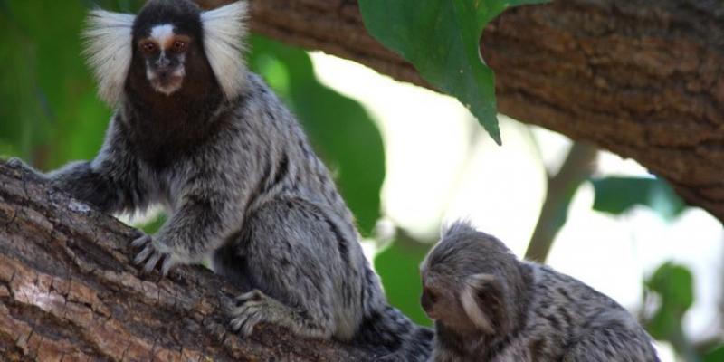 MMA cria programa para resgatar animais silvestres — Português (Brasil)